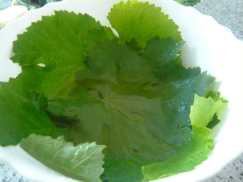 Виноградные листья следует обдать кипятком, отчего они потемнеют