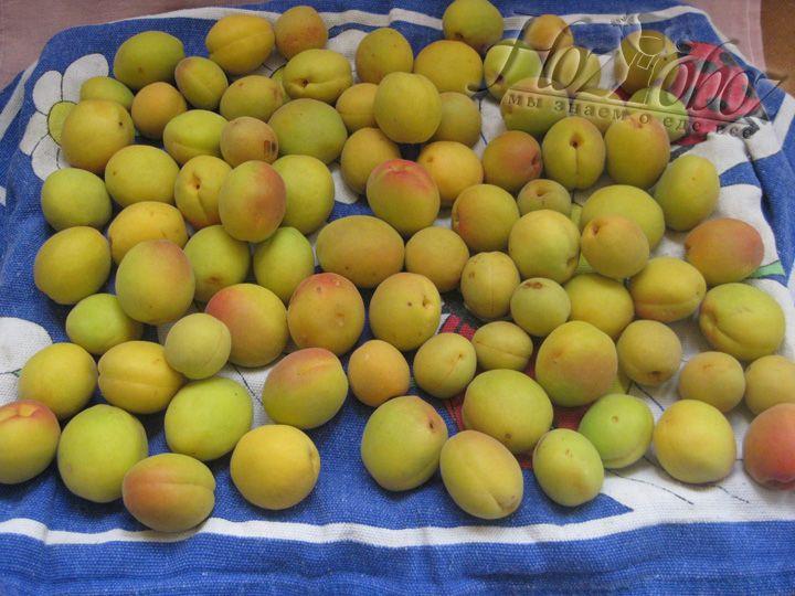 Отбираем, моем, сушим абрикосы