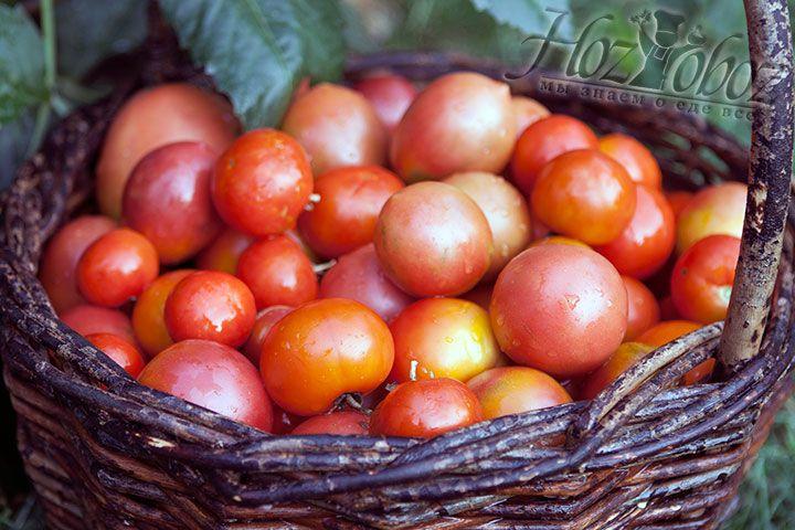 Заготавливаем спелые помидоры