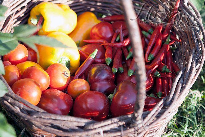 Кроме томатов нам понадобятся и другие овощи к выбору которых следует подойти не менее серьезно