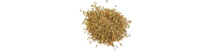 Семена фенхеля (foeniculum-vulgare)