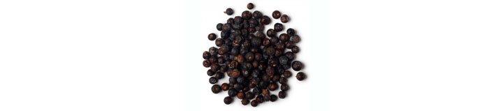 Ягоды можжевельника (juniperus communis)