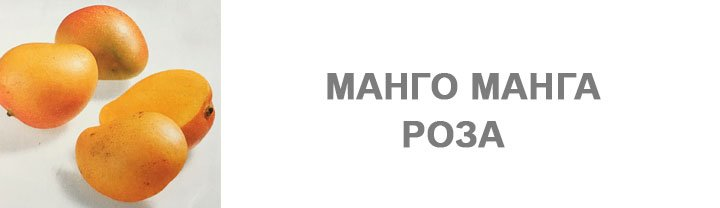 Манго Манга Роза