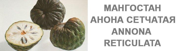 Мангостан Annona Reticulata